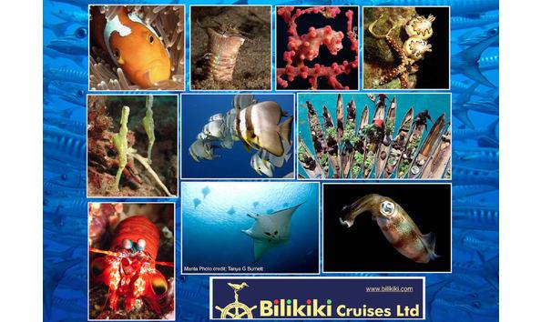 Big image bilikiki 4