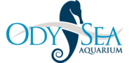 Sponsor logo odysea logo